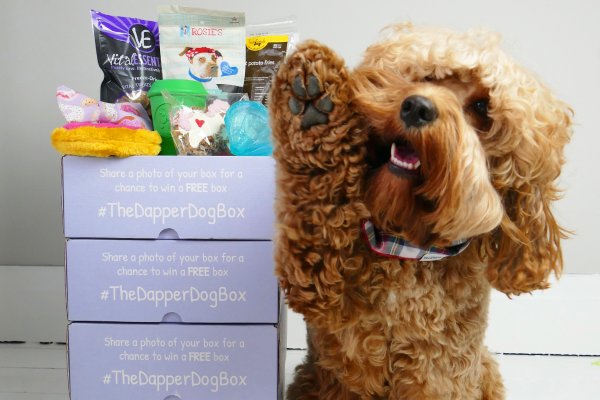8 subscription boxes to gift any pet lover cratejoy